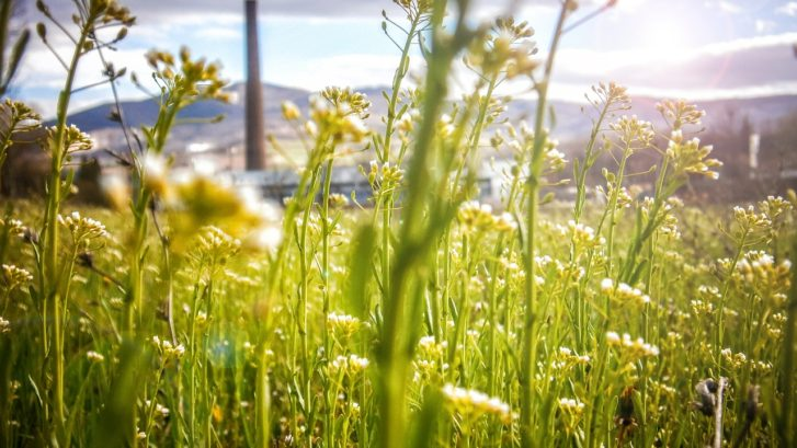 Incorporating Sustainability Can Grow Your Business