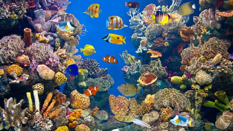 Climate Change and Marine Life